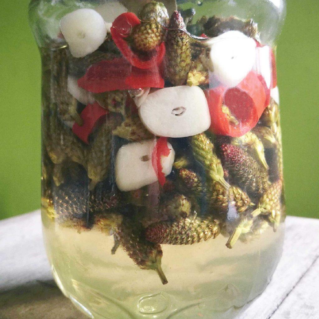 Spitzwegerich sauer eingelegt. Wildpflanzen-Rezept.