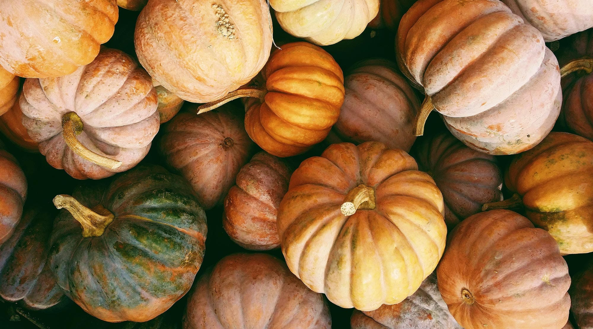 nachhaltig essen. Saisonkalender Oktober