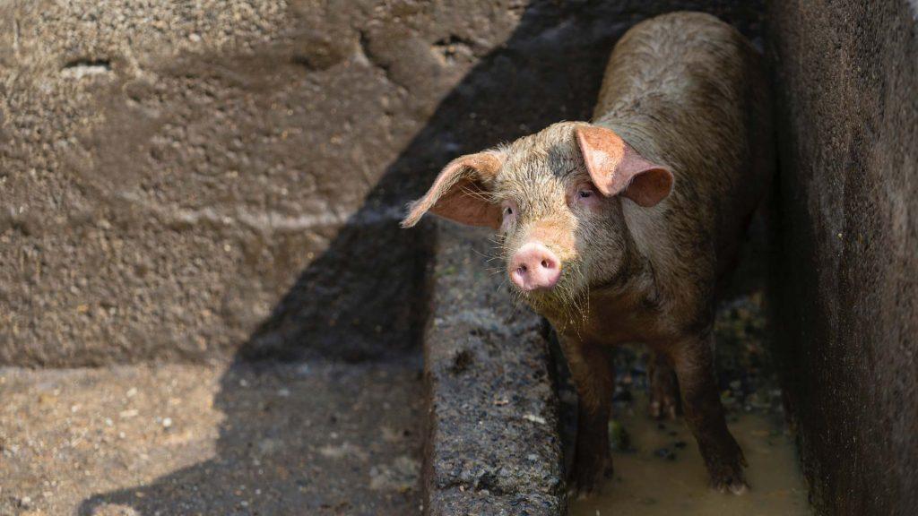 Ein veganer Lebensstil kann sehr viel Wasser einsparen.