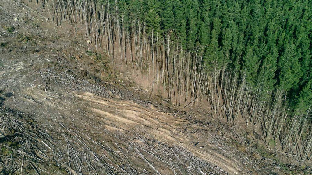 Wer vegan lebt braucht weniger Anbaufläche für sein Essen und vermeidet so Waldrodung.