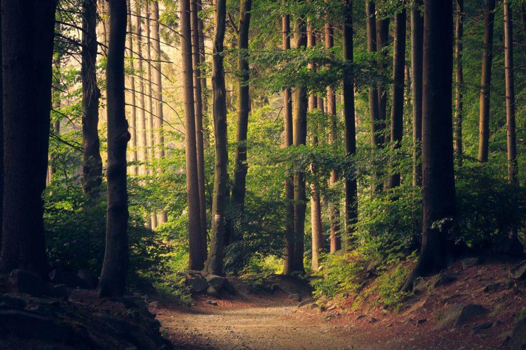 eine der Ursachen von Depressionen ist auch zu wenig Zeit in der Natur zu verbringen.