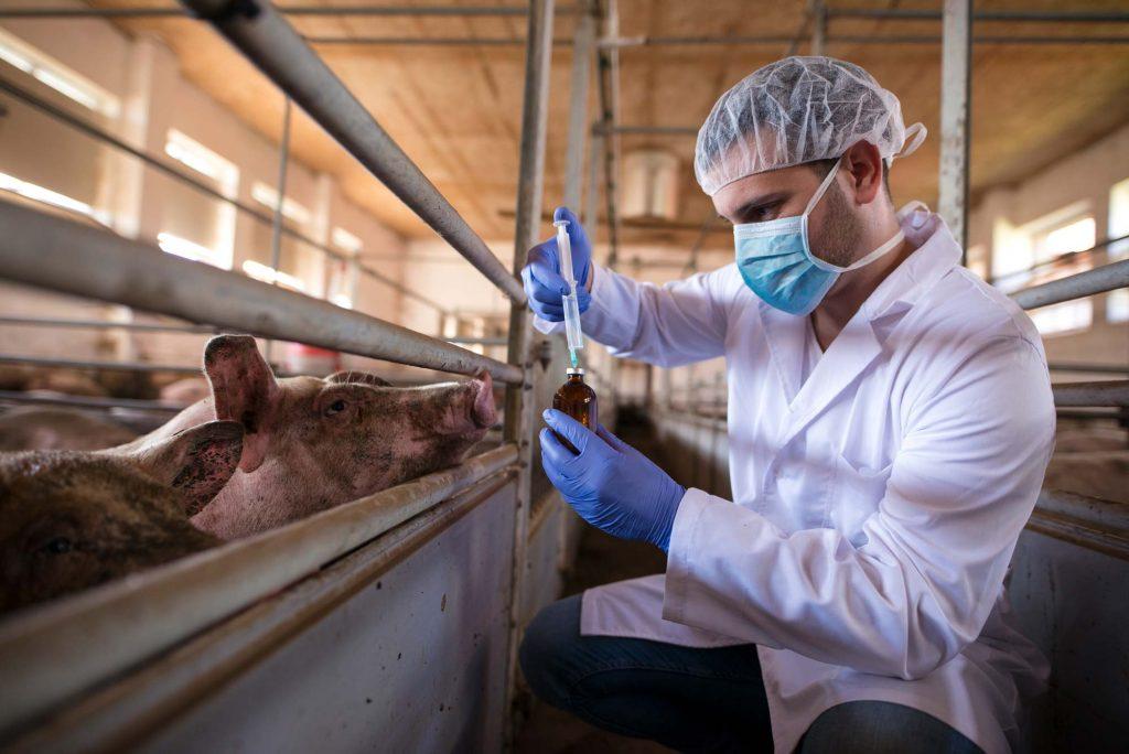 Antibiotikaresistenzen durch Massentierhaltung