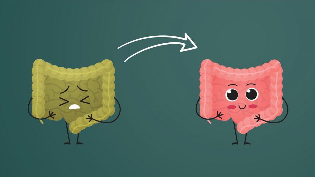 Ein gesunder Darm ist der Grundpfeiler für ein gesundes Immunsystem.